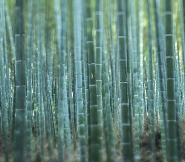 Les zones humides de Chine à l'honneur : Être médiateur de la nature