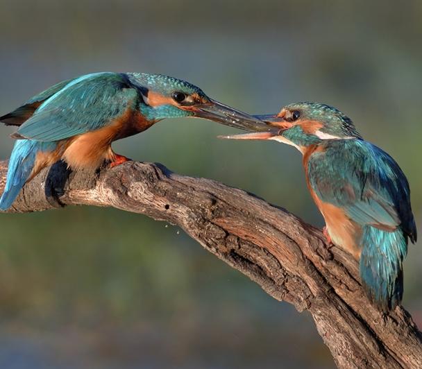 Sortie en canoë à l'écoute des chants d'oiseaux