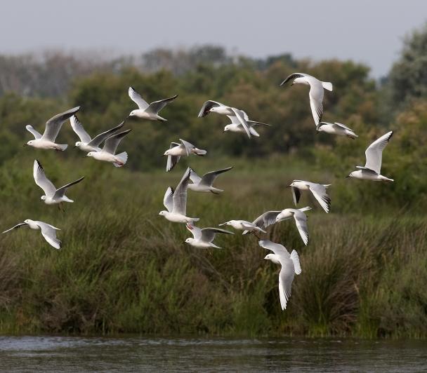 Vis ma vie de gestionnaire d'espace naturel ou comment recenser les oiseaux chanteurs ?