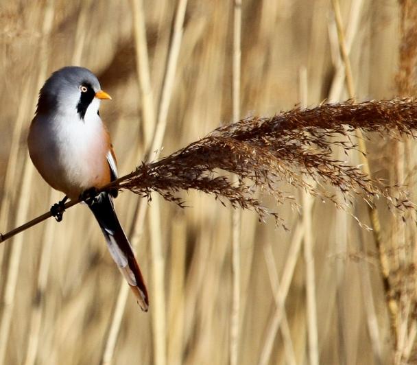 Comment bien reconnaitre les oiseaux !!