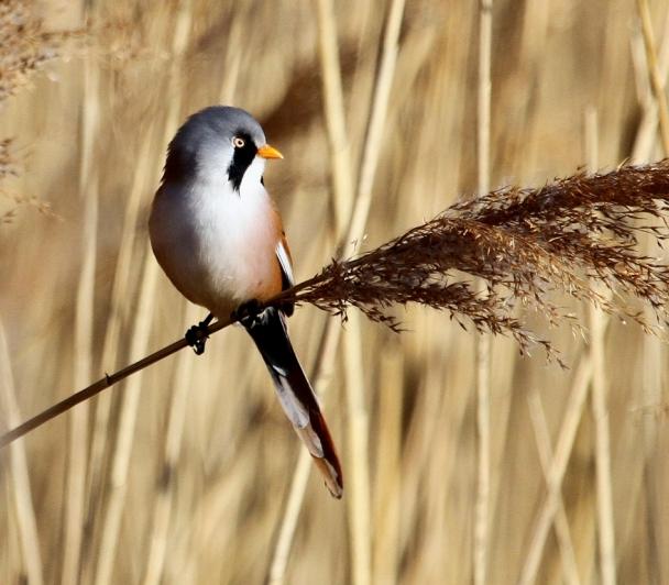 Comment bien reconnaître les oiseaux