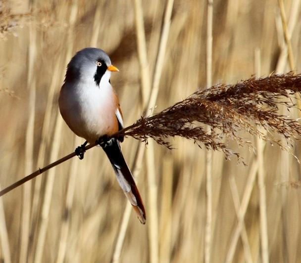 Comment bien reconnaitre les oiseaux