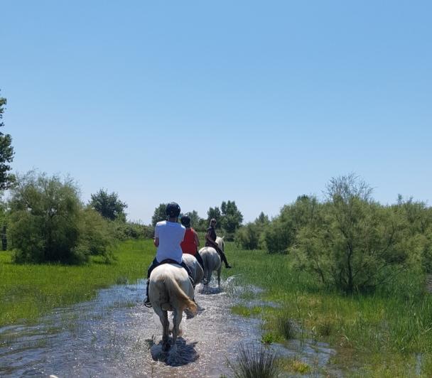 Balade à cheval au Vigueirat