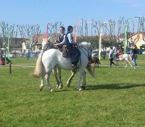 Le cheval Camargue dans tous ses états