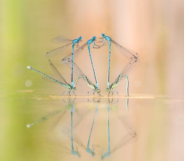 Ondines au fil de l'eau de L'APRAN