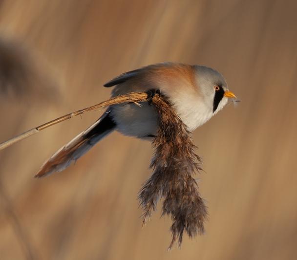 Master-Classe nature : Les passereaux