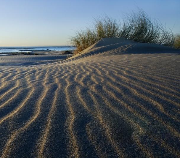 Découverte des dunes de la Réserve Naturelle Nationale de Camargue