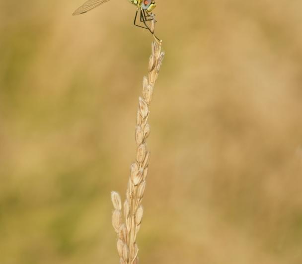 Découverte d'Amphise, entre histoire et biodiversité