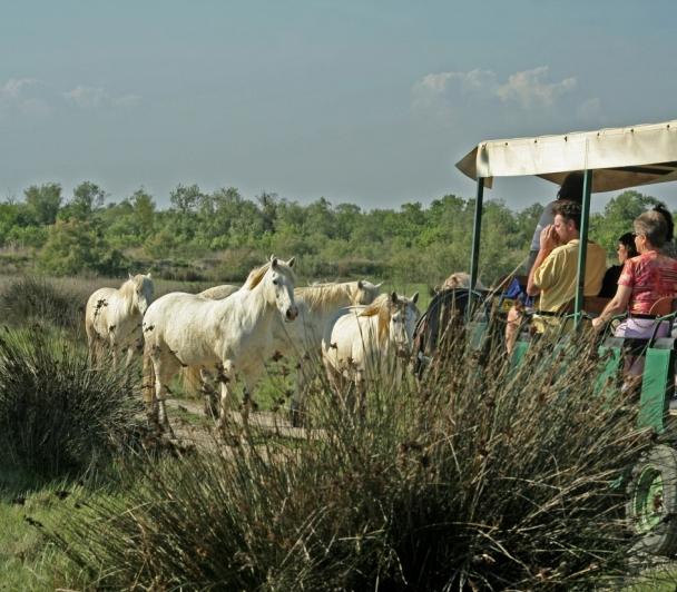 La Camargue et la Crau, terres d'élevage