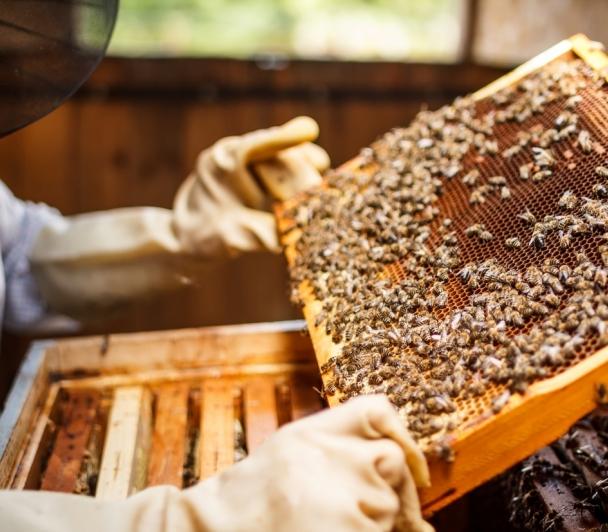 Il était une fois….le miel ! avec le Syndicat des Apiculteurs