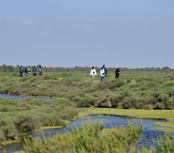Le They du Roustan, entre milieu anthropique et zone humide