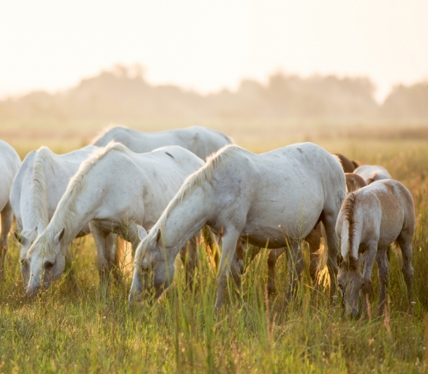 """Atelier photo """"chevaux en liberté"""""""