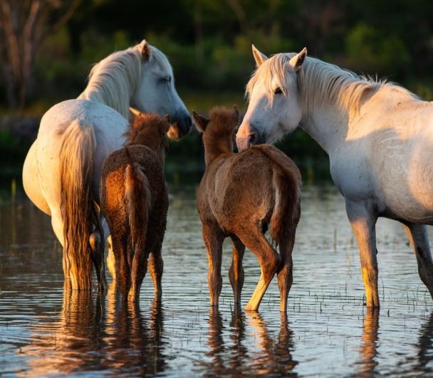 Sortie Photo : chevaux et poulains en liberté