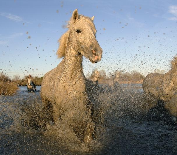 Une journée autour du cheval de Camargue et des traditions