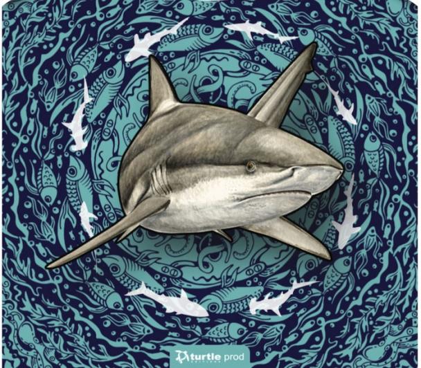 Master-Classe nature : Les requins
