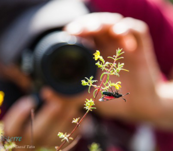 Stage de photographie nature