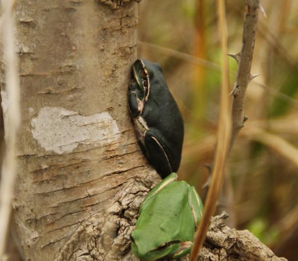 Découverte des reptiles et amphibiens de Camargue