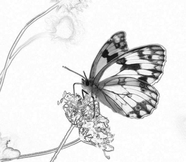 Un autre regard : Les papillons de Henri WILLEM