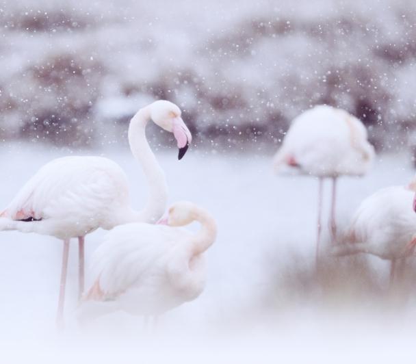 Top 25 Wild Bird du National Geographic de Christian Bagnol