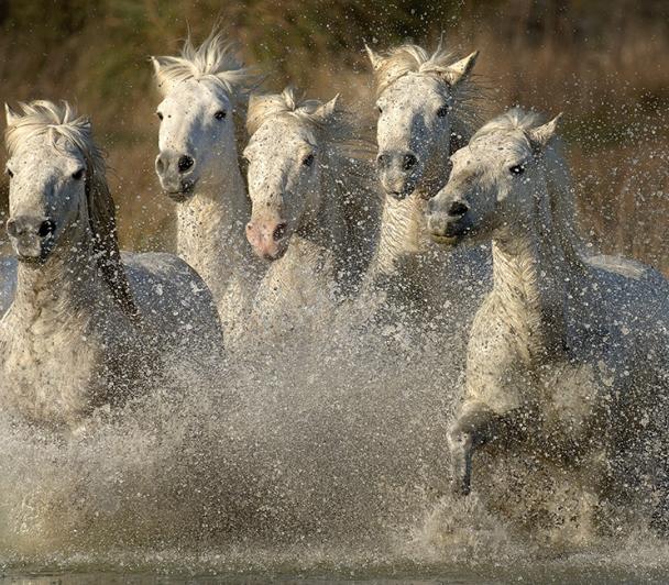 Des chevaux, des oiseaux et des hommes à cheval !!