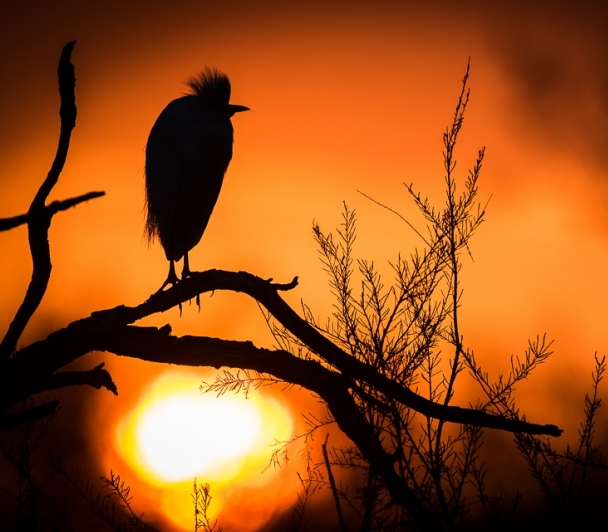 Le choeur de l'aube