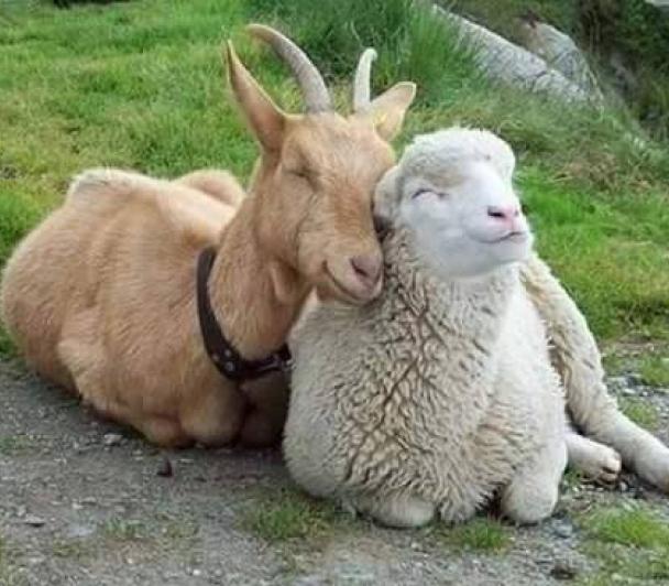 Dessine ton animal à la ferme