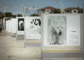 Exposition toundra Olivier LARREY 2021