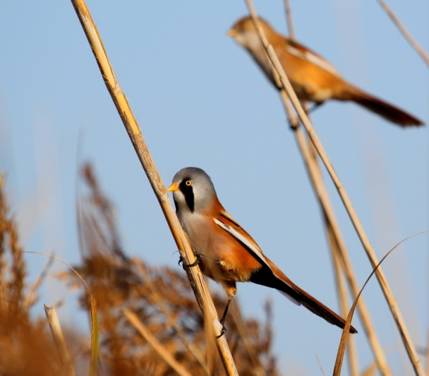 Découvrir les oiseaux grâce au baguage