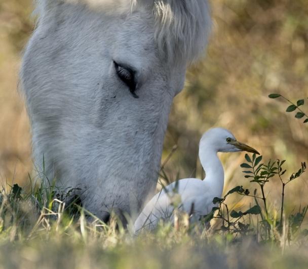 Balade nature dans les marais de Beauchamp