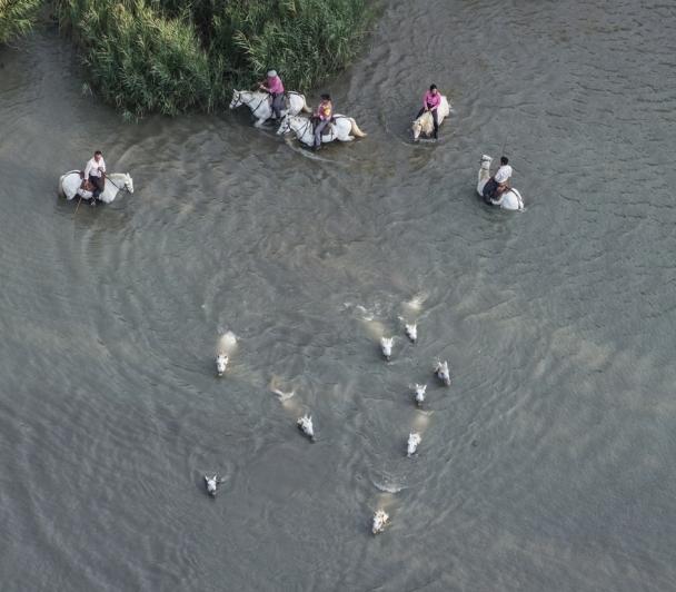 L'embouchure du Rhône à cheval