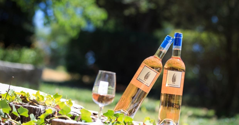 Isle Saint Pierre : un vignoble de la ripisylve