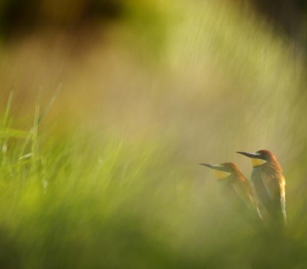 Oiseaux et Changement global de Jonathan Lhoir