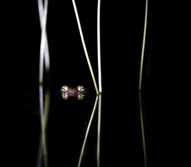 Fauna Garriga, de Jonathan LHOIR