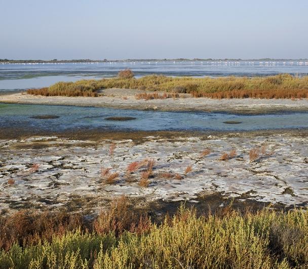 Lagune et Marais, de la ville à la Plage