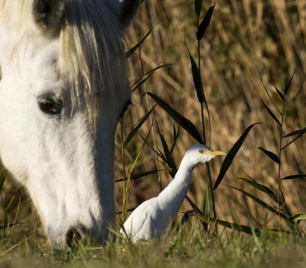Du cheval à l'ornithologie à cheval