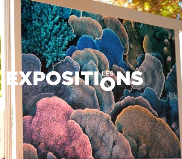 A découvrir : Les expositions extérieures de l'édition 2021 du Festival de la Camargue