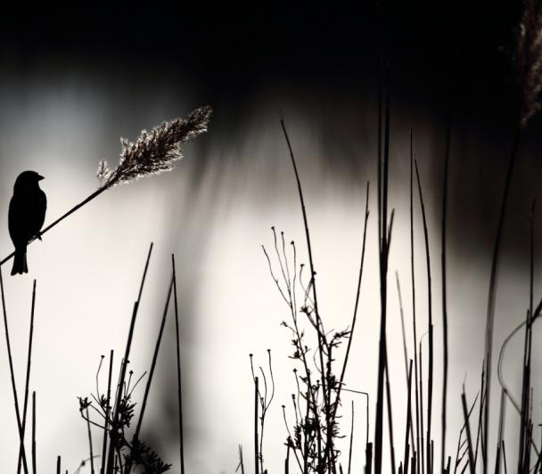 Les secrets des photographes naturalistes