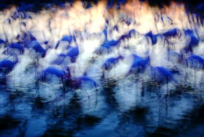 """Jonathan Lhoir - """"Variation sur le flamant rose"""".2"""