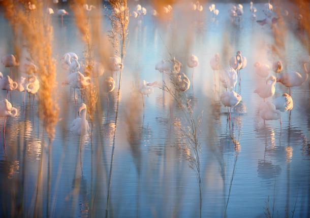 """Jonathan Lhoir - """"Variation sur le flamant rose"""".1"""