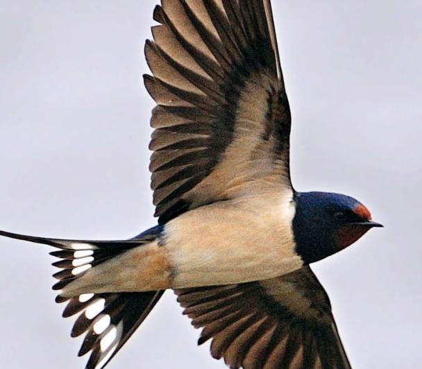 A la découverte des oiseaux de Camargue - LPO PACA