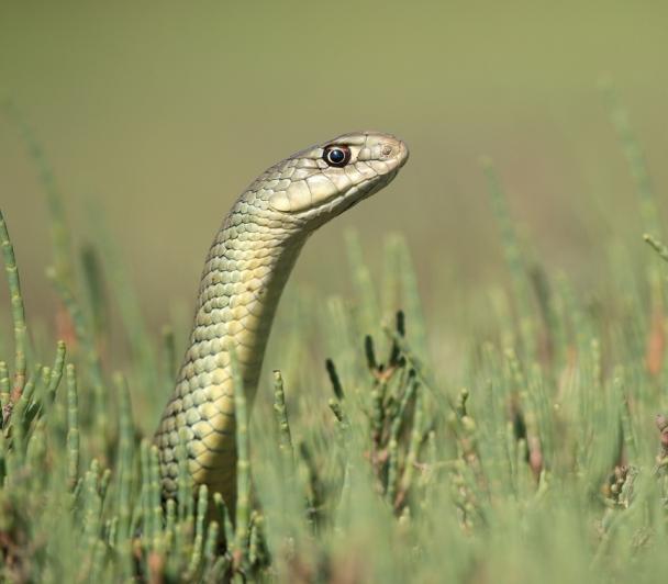 Sur la piste des serpents