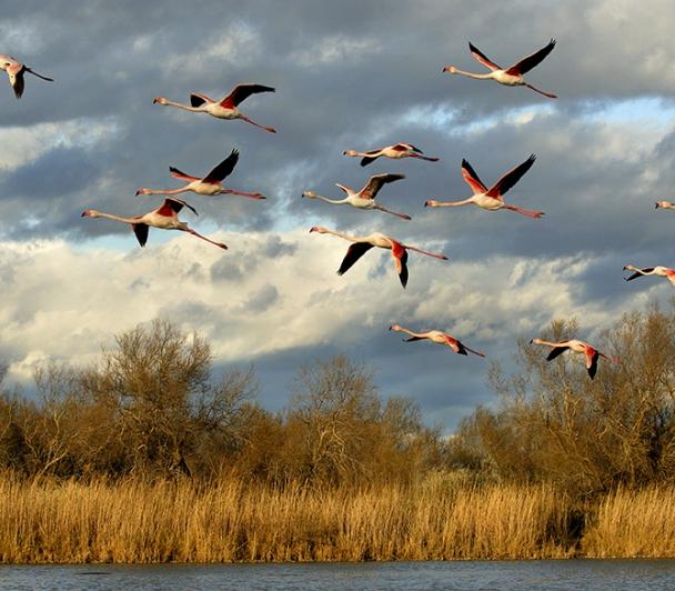 Sortie ornithologique sur les marais du Verdier