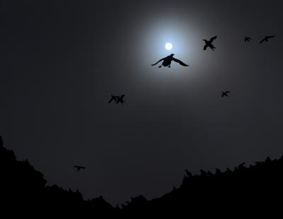 Luca MELCARNE // l'envole de la nuit