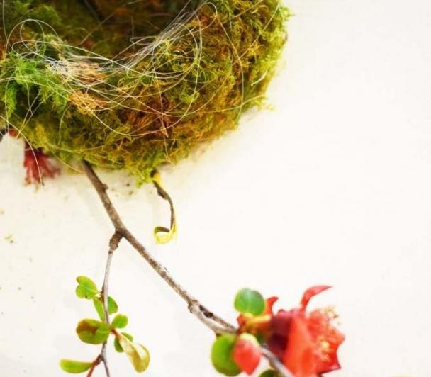 Nichée sauvage…petit à petit chacun fait son nid