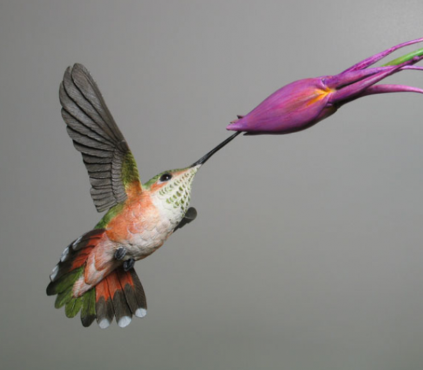 Oiseaux de Guyane en Amazonie de Fabrice Teurquety