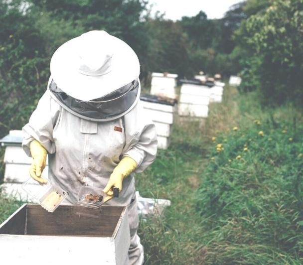 L'apiculture en 2021