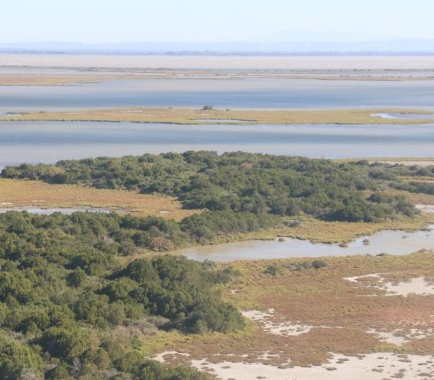 Le bois des Rièges : Au cœur de la Réserve Nationale de Camargue