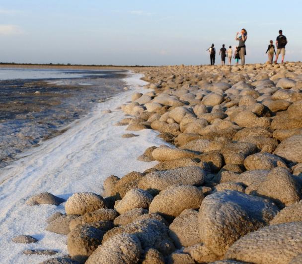 Sortie nature sur le littoral de Camargue