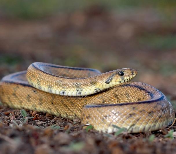 Sur la piste des serpents aux Vigueirat