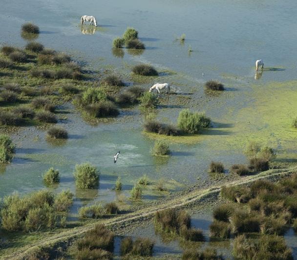 Découverte de l'embouchure du Rhône : Rive droite